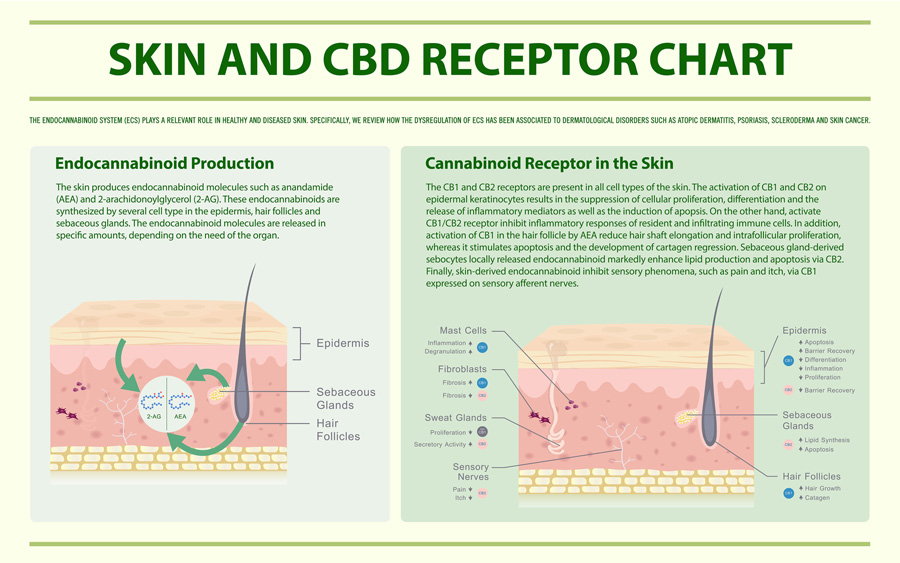 The Benefits Of CBD On The Skin